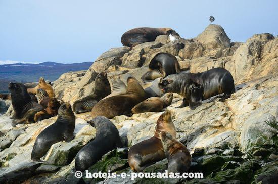 lobos-marinhos-ushuaia