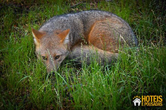 raposa ushuaia